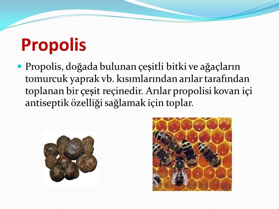 Propolis Propolis, doğada bulunan çeşitli bitki ve ağaçların tomurcuk yaprak vb.