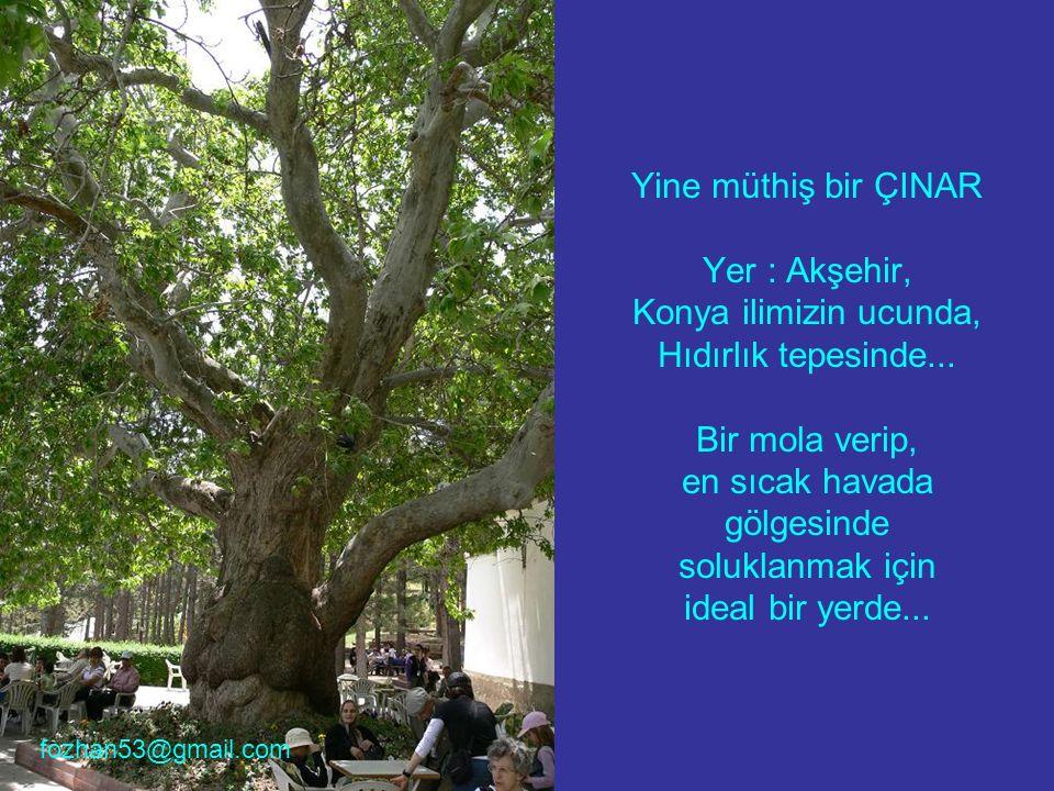 Yine müthiş bir ÇINAR Yer : Akşehir, Konya ilimizin ucunda, Hıdırlık tepesinde... Bir mola verip, en sıcak havada gölgesinde soluklanmak için ideal bi