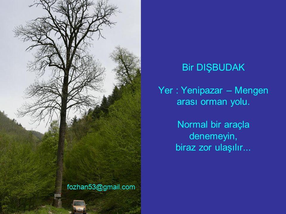 Bir DIŞBUDAK Yer : Yenipazar – Mengen arası orman yolu. Normal bir araçla denemeyin, biraz zor ulaşılır... fozhan53@gmail.com
