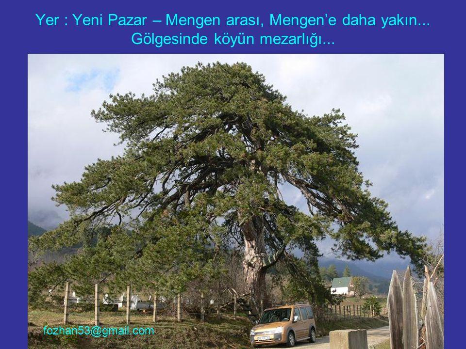 Yer : Yeni Pazar – Mengen arası, Mengen'e daha yakın... Gölgesinde köyün mezarlığı... fozhan53@gmail.com