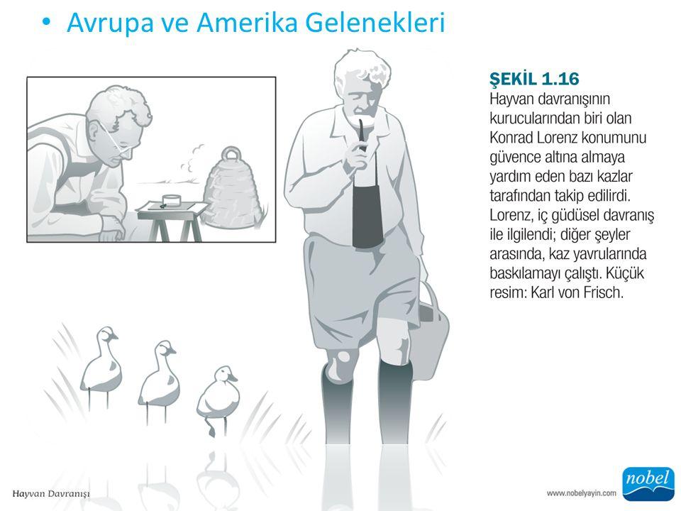 Avrupa ve Amerika Gelenekleri