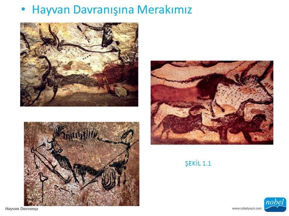 Hayvan Davranışına Merakımız ŞEKİL 1.1