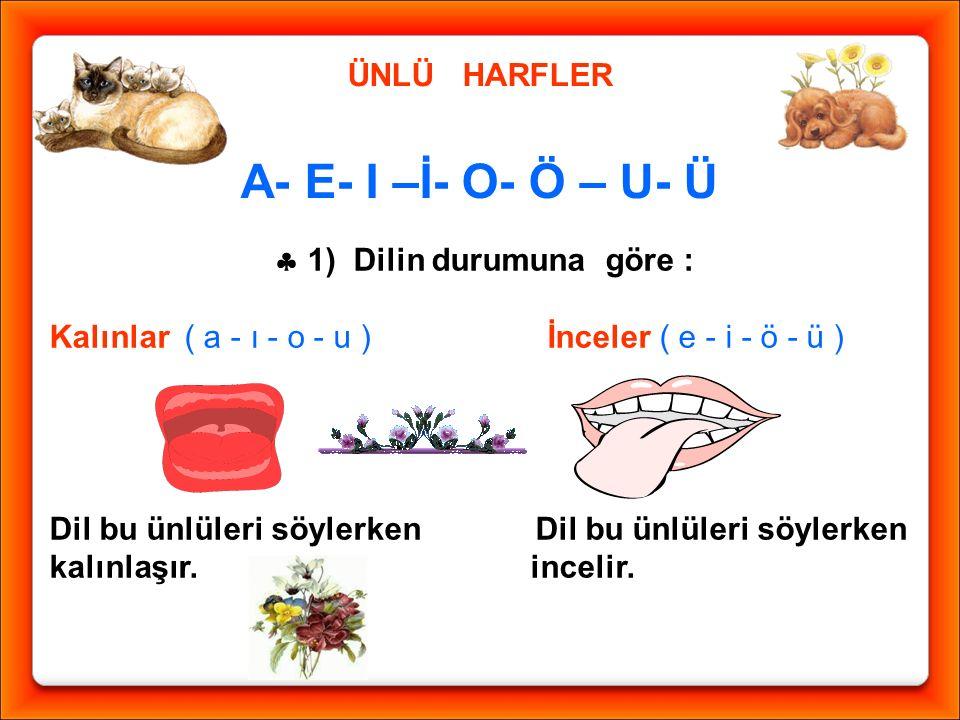 ÜNLÜ HARFLER A- E- I –İ- O- Ö – U- Ü  1) Dilin durumuna göre : Kalınlar ( a - ı - o - u ) İnceler ( e - i - ö - ü ) Dil bu ünlüleri söylerken kalınla