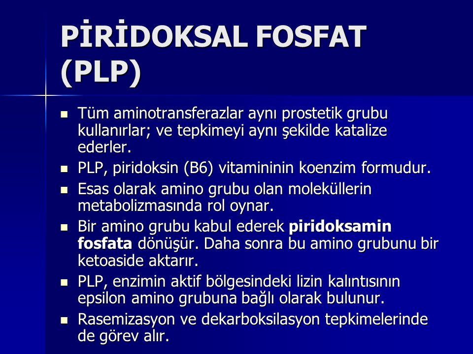 PİRİDOKSAL FOSFAT (PLP) Tüm aminotransferazlar aynı prostetik grubu kullanırlar; ve tepkimeyi aynı şekilde katalize ederler.