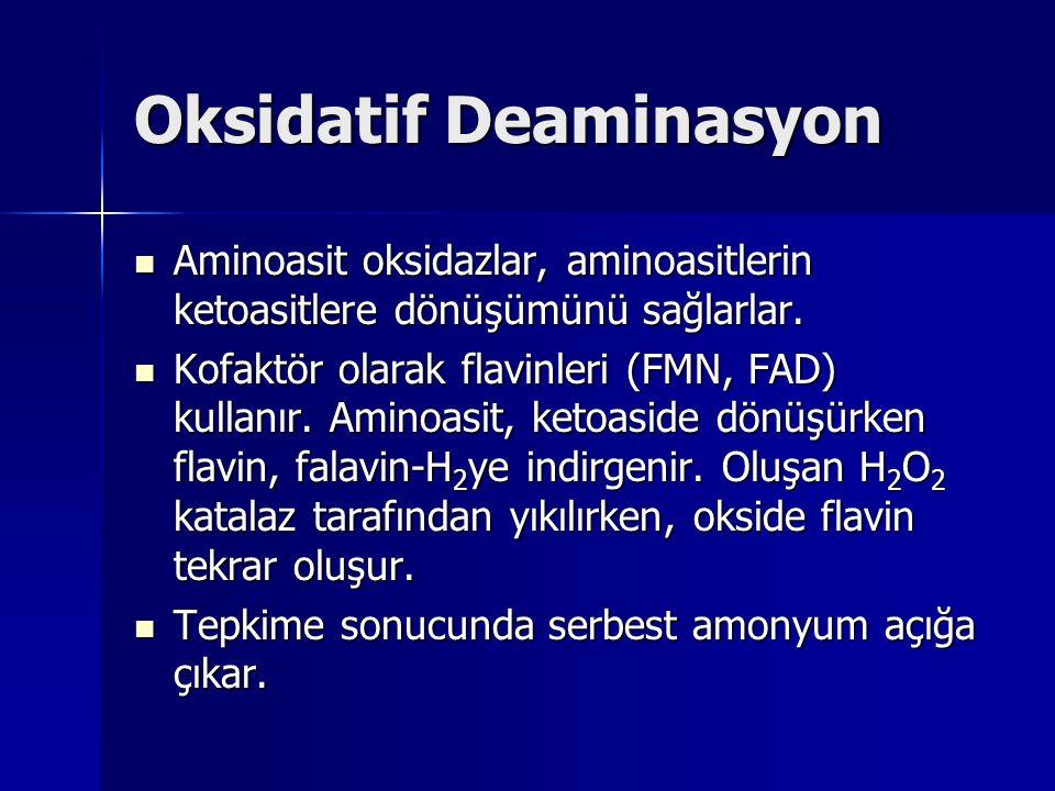 Oksidatif Deaminasyon Aminoasit oksidazlar, aminoasitlerin ketoasitlere dönüşümünü sağlarlar.