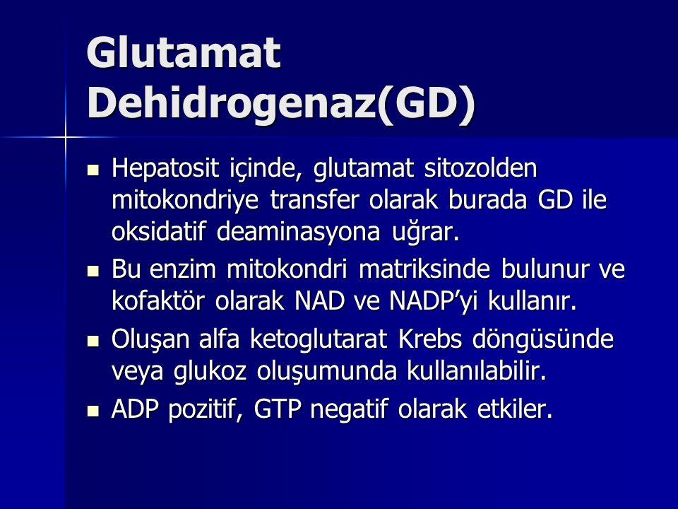 Glutamat Dehidrogenaz(GD) Hepatosit içinde, glutamat sitozolden mitokondriye transfer olarak burada GD ile oksidatif deaminasyona uğrar.