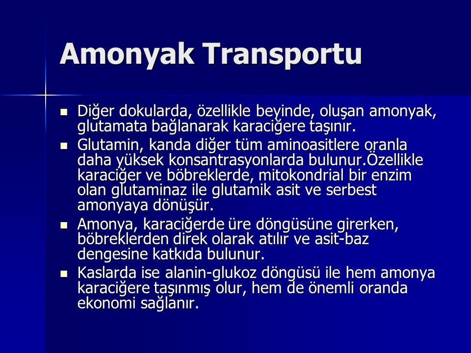 Amonyak Transportu Diğer dokularda, özellikle beyinde, oluşan amonyak, glutamata bağlanarak karaciğere taşınır.