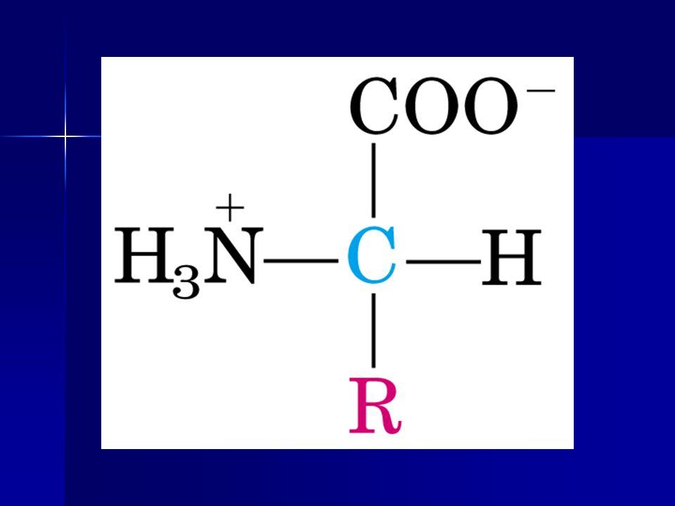 Üre Döngüsü Enzimleri 1.Karbamoil fosfat sentetaz 2.