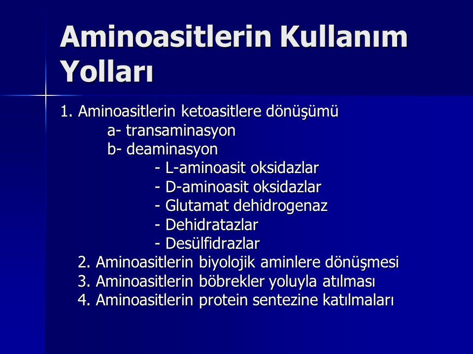 Aminoasitlerin Kullanım Yolları 1.