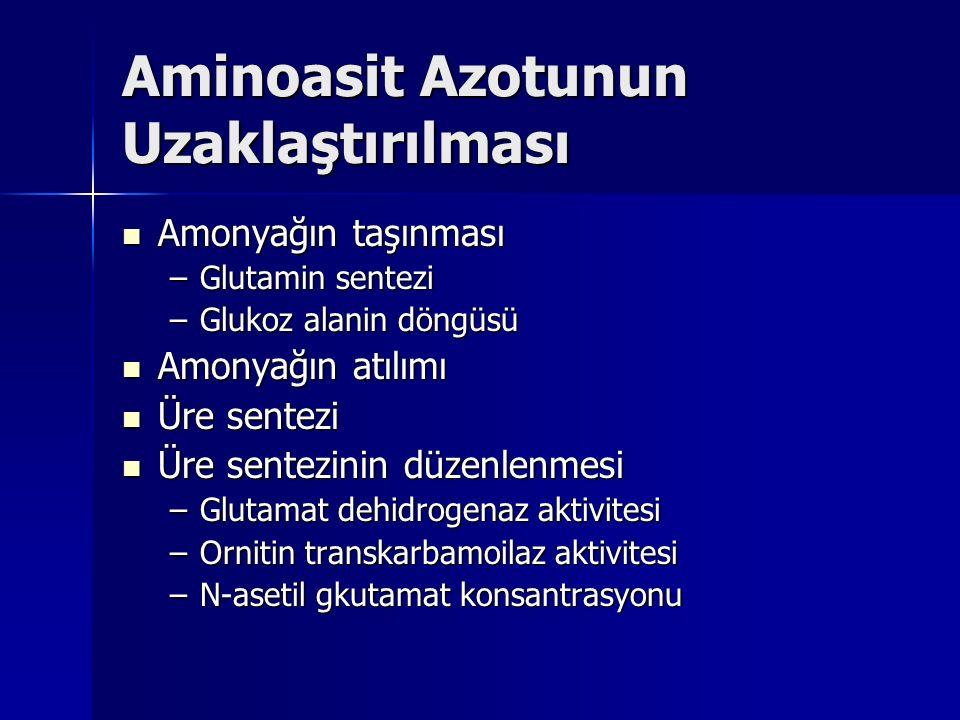Aminoasit Azotunun Uzaklaştırılması Amonyağın taşınması Amonyağın taşınması –Glutamin sentezi –Glukoz alanin döngüsü Amonyağın atılımı Amonyağın atılımı Üre sentezi Üre sentezi Üre sentezinin düzenlenmesi Üre sentezinin düzenlenmesi –Glutamat dehidrogenaz aktivitesi –Ornitin transkarbamoilaz aktivitesi –N-asetil gkutamat konsantrasyonu