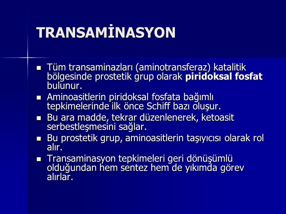 TRANSAMİNASYON Tüm transaminazları (aminotransferaz) katalitik bölgesinde prostetik grup olarak piridoksal fosfat bulunur.
