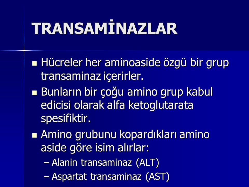 TRANSAMİNAZLAR Hücreler her aminoaside özgü bir grup transaminaz içerirler.