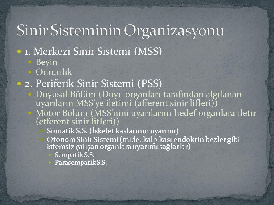 1. Merkezi Sinir Sistemi (MSS) Beyin Omurilik 2. Periferik Sinir Sistemi (PSS) Duyusal Bölüm (Duyu organları tarafından algılanan uyarıların MSS'ye il