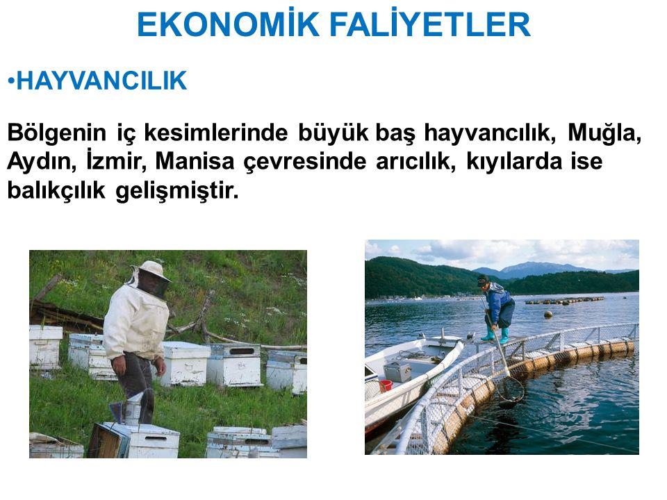 EKONOMİK FALİYETLER HAYVANCILIK Bölgenin iç kesimlerinde büyük baş hayvancılık, Muğla, Aydın, İzmir, Manisa çevresinde arıcılık, kıyılarda ise balıkçı