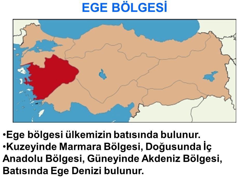 Ege bölgesi ülkemizin batısında bulunur. Kuzeyinde Marmara Bölgesi, Doğusunda İç Anadolu Bölgesi, Güneyinde Akdeniz Bölgesi, Batısında Ege Denizi bulu