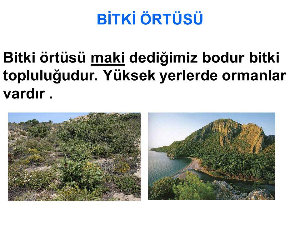MADENLERİ Ege bölgesinin başlıca madenleri; Linyit, Demir, Bor, Civa, Krom,Tuz ve Mermer'dir.
