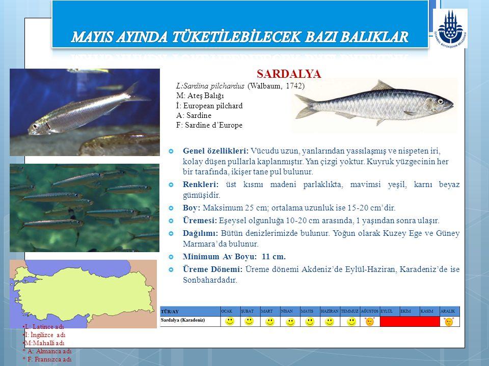 SARDALYA L:Sardina pilchardus (Walbaum, 1742) M: Ateş Balığı İ: European pilchard A: Sardine F: Sardine d'Europe  Genel özellikleri: Vücudu uzun, yanlarından yassılaşmış ve nispeten iri, kolay düşen pullarla kaplanmıştır.