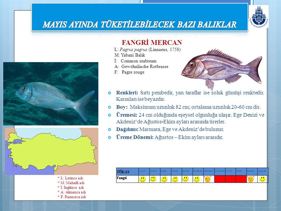 FANGRİ MERCAN L: Pagrus pagrus (Linnaeus, 1758) M: Yabani Balık İ: Common seabream A: Gewöhnlinche Rotbrasse F: Pagre rouge  Renkleri: Sırtı pembedir, yan taraflar ise soluk gümüşi renktedir.