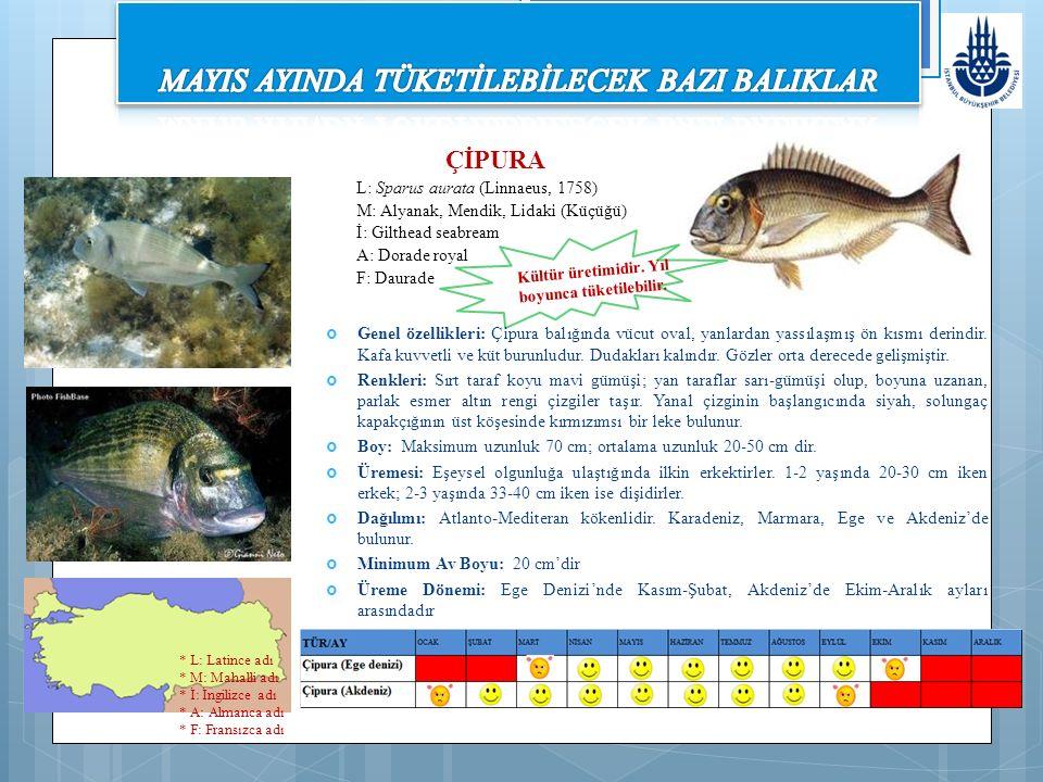 Genel özellikleri: Çipura balığında vücut oval, yanlardan yassılaşmış ön kısmı derindir. Kafa kuvvetli ve küt burunludur. Dudakları kalındır. Gözler