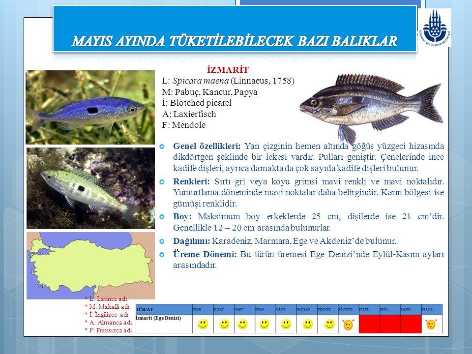 İZMARİT L: Spicara maena (Linnaeus, 1758) M: Pabuç, Kancur, Papya İ: Blotched picarel A: Laxierfisch F: Mendole  Genel özellikleri: Yan çizginin hemen altında göğüs yüzgeci hizasında dikdörtgen şeklinde bir lekesi vardır.