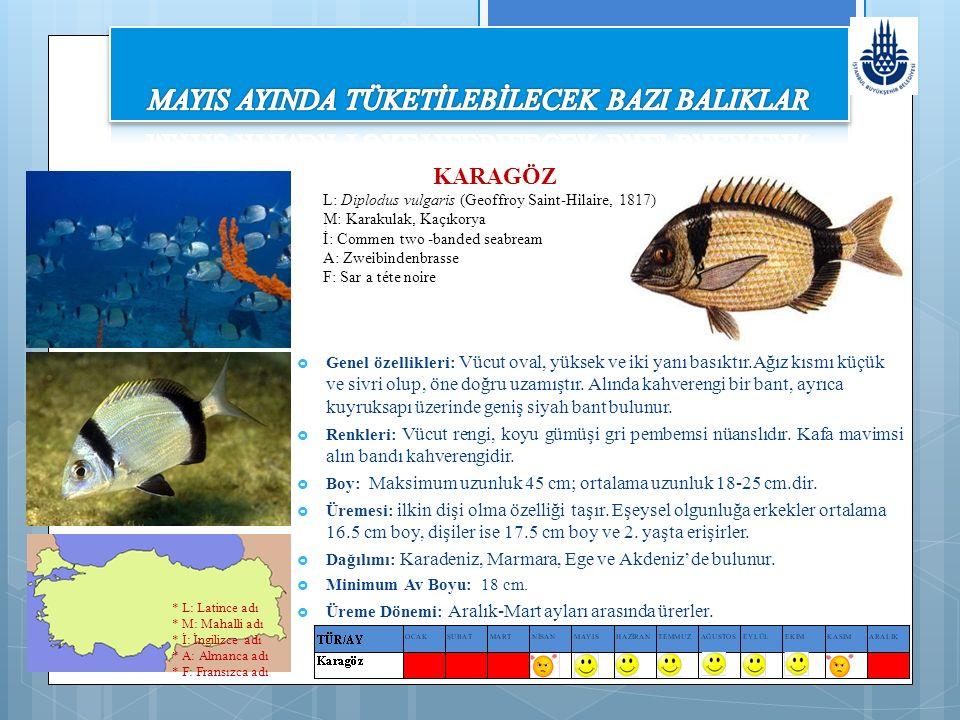 KEFAL (MAVRAKİ-MAVRİ)  Genel özellikleri: Vücut uzun, burun sivri, üst dudak kalındır.