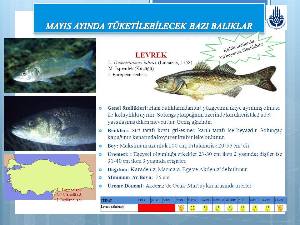  Genel özellikleri: Hani balıklarından sırt yüzgecinin ikiye ayrılmış olması ile kolaylıkla ayrılır.