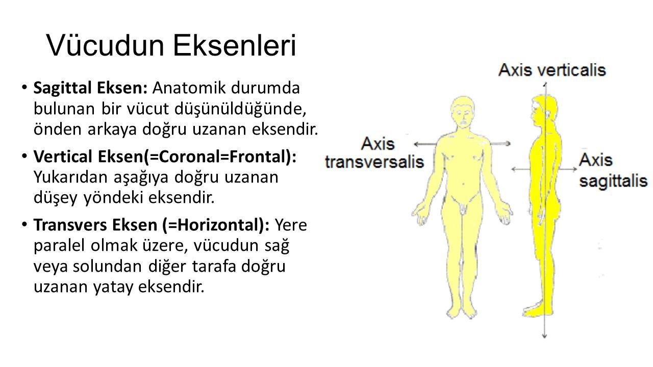 Sagittal Eksen: Anatomik durumda bulunan bir vücut düşünüldüğünde, önden arkaya doğru uzanan eksendir. Vertical Eksen(=Coronal=Frontal): Yukarıdan aşa