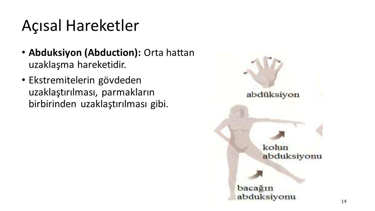 Açısal Hareketler Abduksiyon (Abduction): Orta hattan uzaklaşma hareketidir.