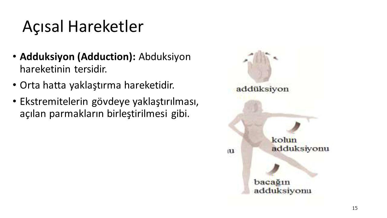 Açısal Hareketler Adduksiyon (Adduction): Abduksiyon hareketinin tersidir. Orta hatta yaklaştırma hareketidir. Ekstremitelerin gövdeye yaklaştırılması