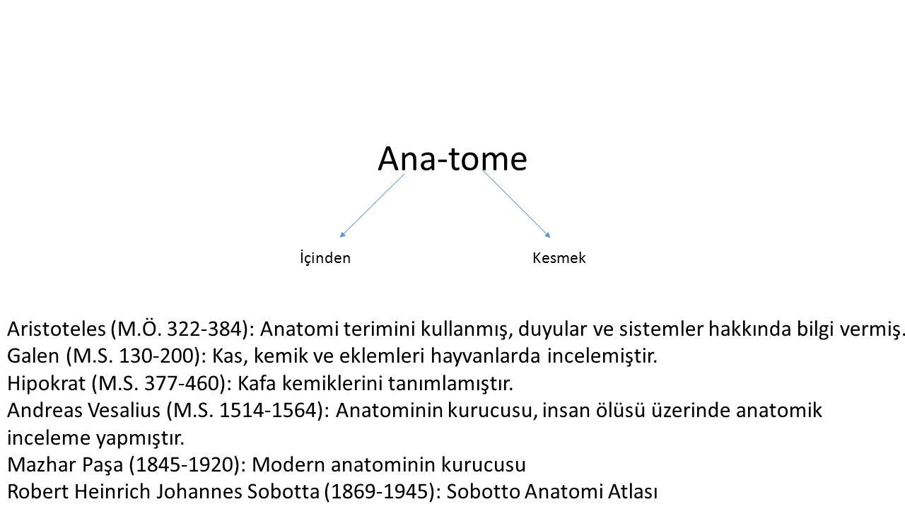Ana-tome İçindenKesmek Aristoteles (M.Ö. 322-384): Anatomi terimini kullanmış, duyular ve sistemler hakkında bilgi vermiş. Galen (M.S. 130-200): Kas,