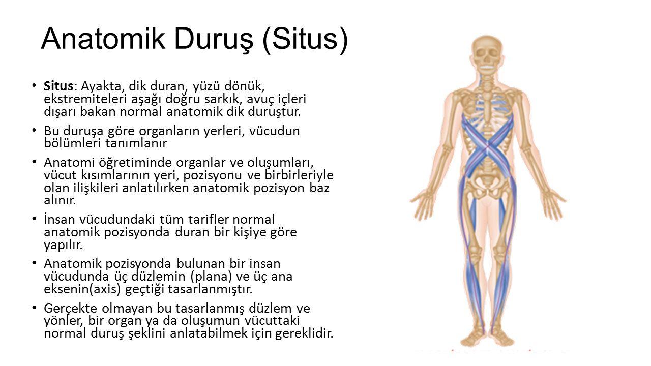 Vücudun Bölümleri Baş (Caput) Boyun (Collum veya Cervix) Gövde (Truncus)  Göğüs (Toraks)  Karın (Abdomen)  Leğen (Pelvis)  Sırt (Dorsum) Uzuvlar, extremiteler (membra veya extremitas)  Üst uzuvlar (extremitas superior)  Alt uzuvlar (extremitas inferior)