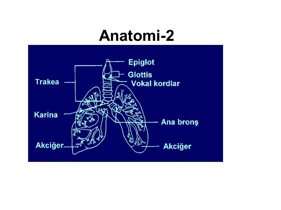 Anatomi-2