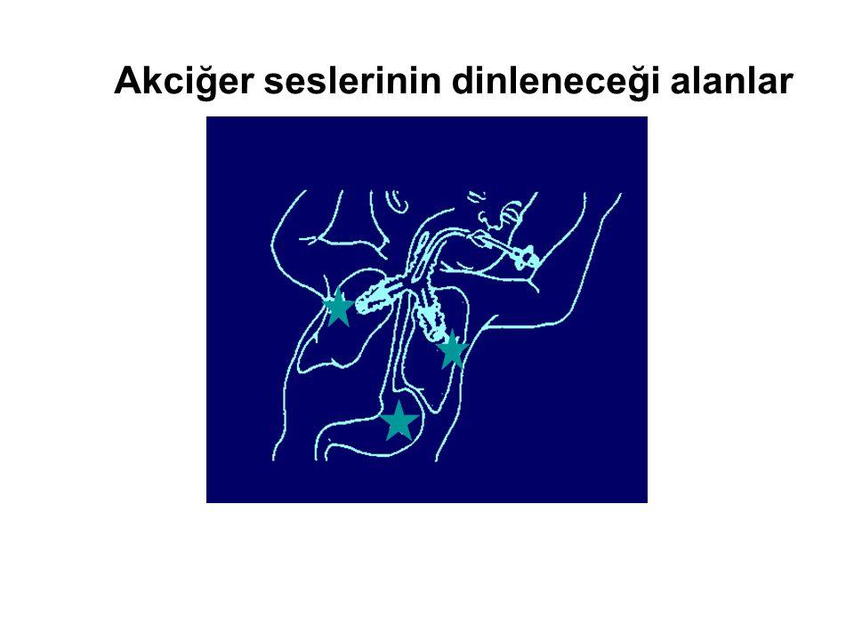 Akciğer seslerinin dinleneceği alanlar