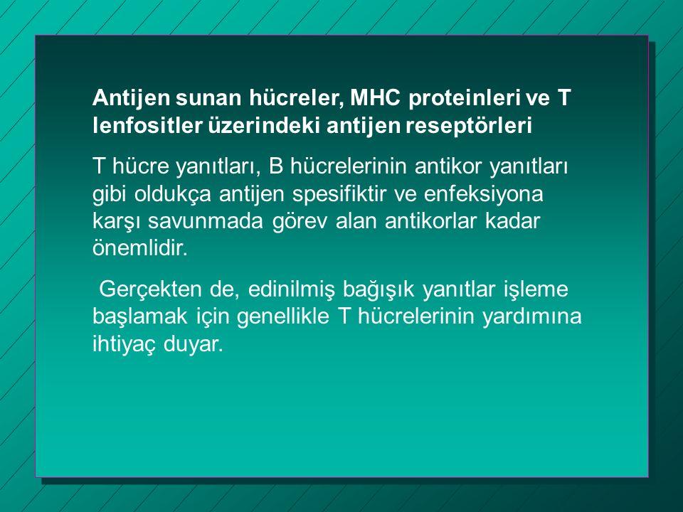 Antijen sunan hücreler, MHC proteinleri ve T lenfositler üzerindeki antijen reseptörleri T hücre yanıtları, B hücrelerinin antikor yanıtları gibi oldukça antijen spesifiktir ve enfeksiyona karşı savunmada görev alan antikorlar kadar önemlidir.