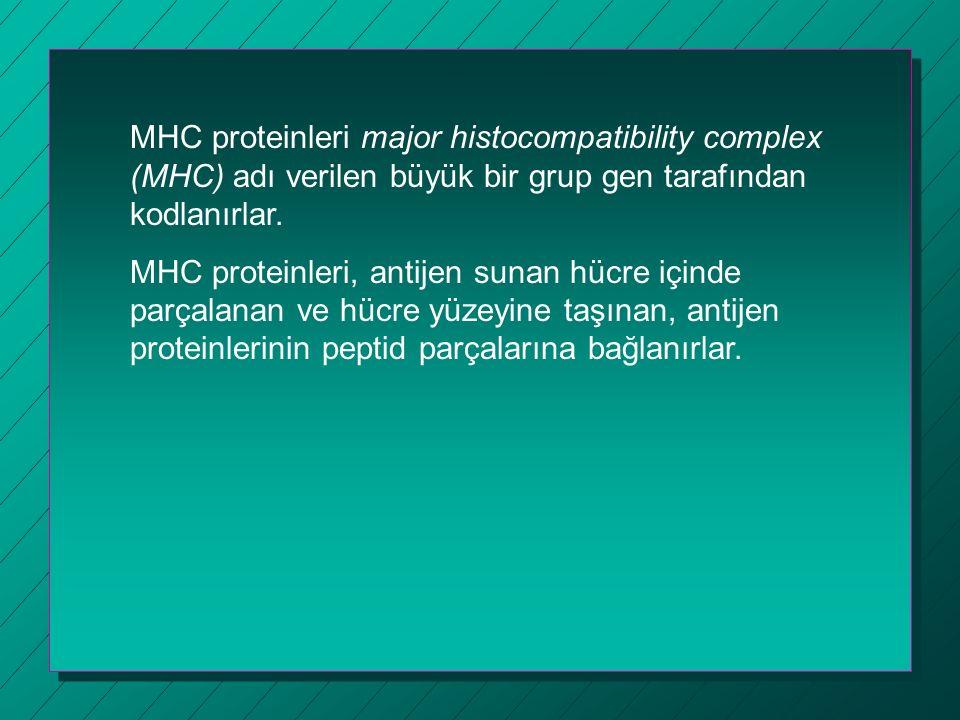 MHC proteinleri major histocompatibility complex (MHC) adı verilen büyük bir grup gen tarafından kodlanırlar. MHC proteinleri, antijen sunan hücre içi