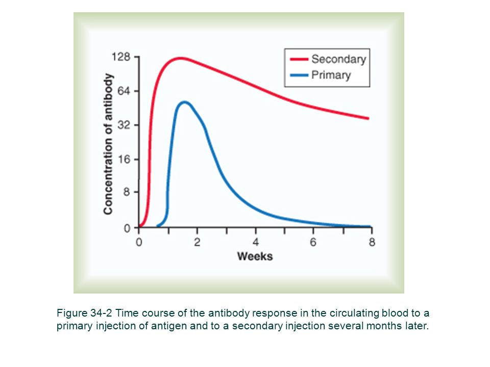 Figure 34-2 Time course of the antibody response in the circulating blood to a primary injection of antigen and to a secondary injection several month
