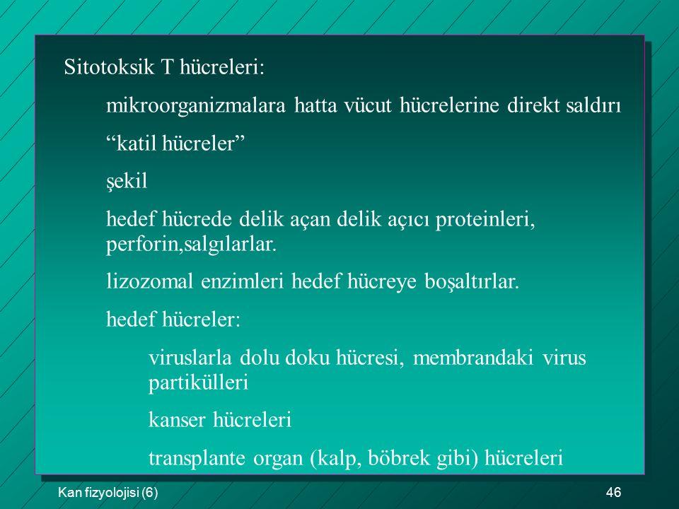 """Kan fizyolojisi (6)46 Sitotoksik T hücreleri: mikroorganizmalara hatta vücut hücrelerine direkt saldırı """"katil hücreler"""" şekil hedef hücrede delik aça"""