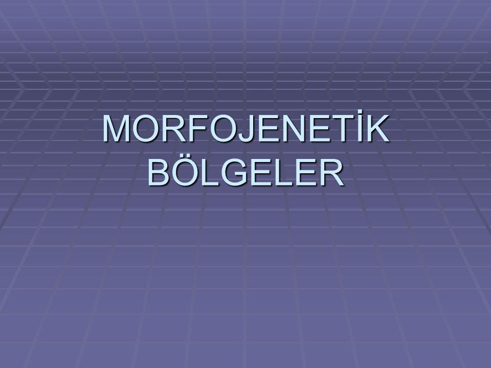 MORFOJENETİK BÖLGELER
