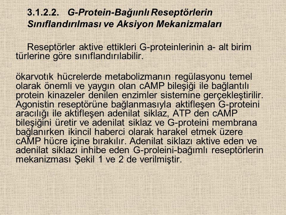 3.1.2.2.G-Protein-Bağıınlı Reseptörlerin Sınıflandırılması ve Aksiyon Mekanizmaları Reseptörler aktive ettikleri G-proteinlerinin a- alt birim türlerine göre sınıflandırılabilir.