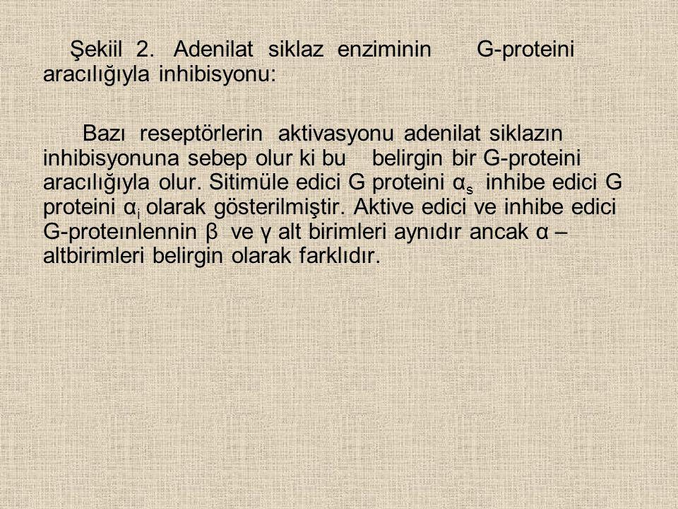 Şekiil 2.