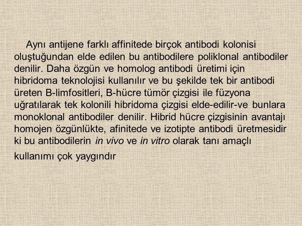 Aynı antijene farklı affinitede birçok antibodi kolonisi oluştuğundan elde edilen bu antibodilere poliklonal antibodiler denilir.