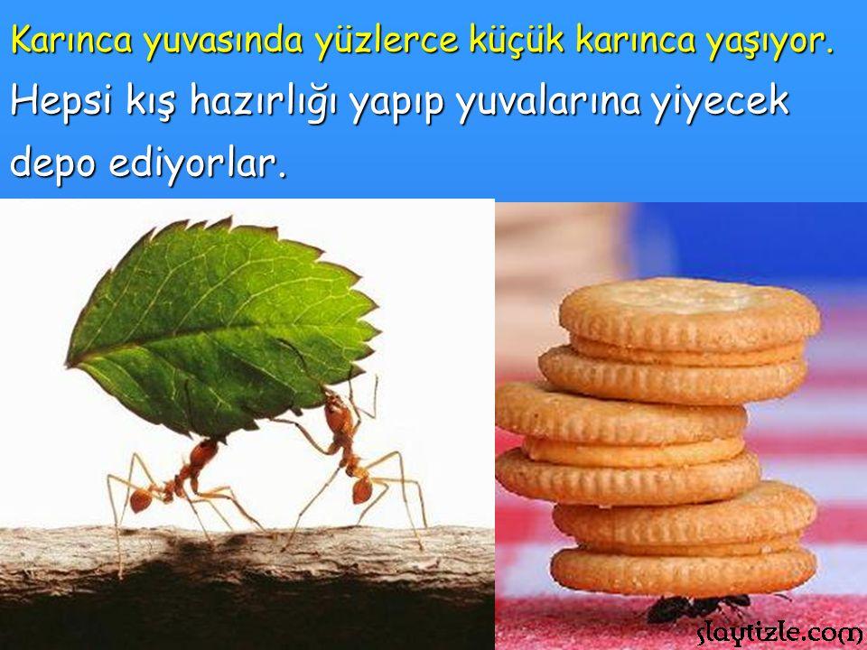 Karınca yuvasında yüzlerce küçük karınca yaşıyor.