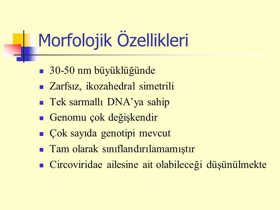 Morfolojik Özellikleri 30-50 nm büyüklüğünde Zarfsız, ikozahedral simetrili Tek sarmallı DNA'ya sahip Genomu çok değişkendir Çok sayıda genotipi mevcut Tam olarak sınıflandırılamamıştır Circoviridae ailesine ait olabileceği düşünülmekte