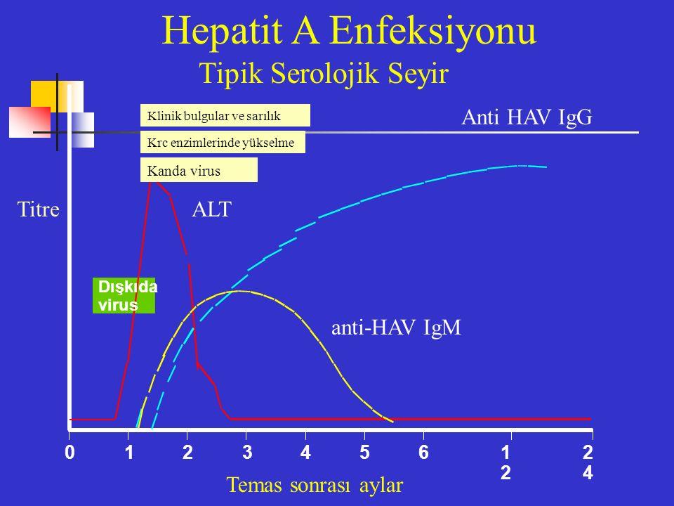 Dışkıda virus 0123 4561212 2424 Hepatit A Enfeksiyonu Anti HAV IgG TitreALT anti-HAV IgM Temas sonrası aylar Tipik Serolojik Seyir Klinik bulgular ve sarılık Krc enzimlerinde yükselme Kanda virus