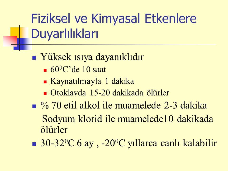 Fiziksel ve Kimyasal Etkenlere Duyarlılıkları Yüksek ısıya dayanıklıdır 60 0 C'de 10 saat Kaynatılmayla 1 dakika Otoklavda 15-20 dakikada ölürler % 70