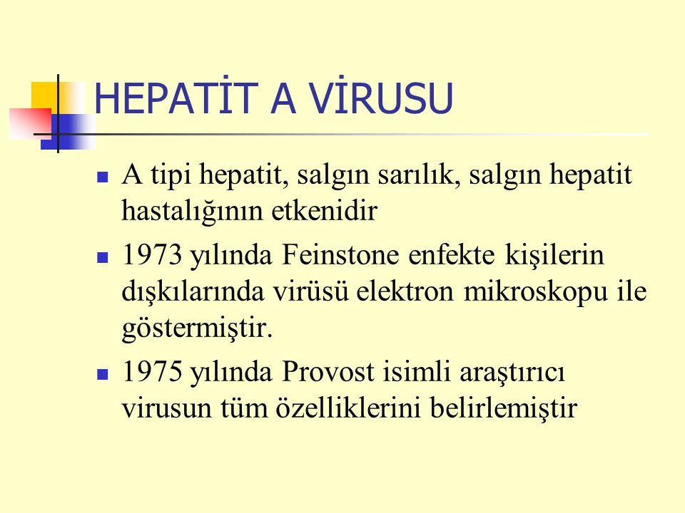 HEPATİT A VİRUSU A tipi hepatit, salgın sarılık, salgın hepatit hastalığının etkenidir 1973 yılında Feinstone enfekte kişilerin dışkılarında virüsü el