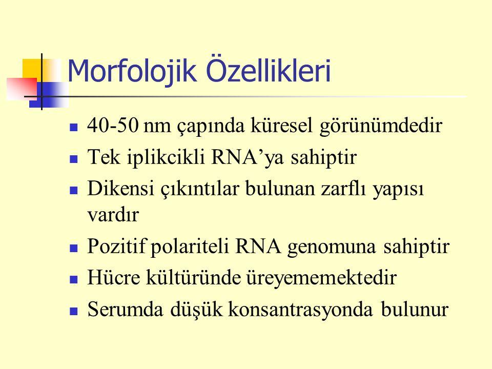 Morfolojik Özellikleri 40-50 nm çapında küresel görünümdedir Tek iplikcikli RNA'ya sahiptir Dikensi çıkıntılar bulunan zarflı yapısı vardır Pozitif polariteli RNA genomuna sahiptir Hücre kültüründe üreyememektedir Serumda düşük konsantrasyonda bulunur