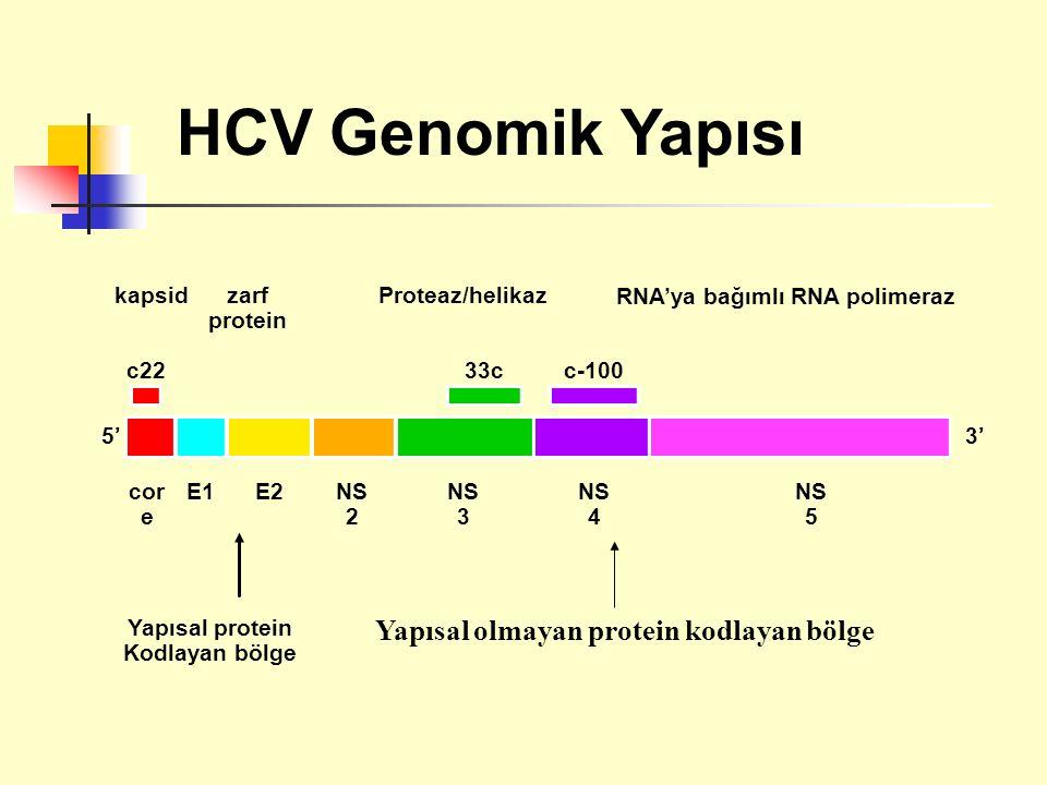 Yapısal protein Kodlayan bölge kapsidzarf protein Proteaz/helikaz RNA'ya bağımlı RNA polimeraz c22 5' cor e E1E2NS 2 NS 3 33c NS 4 c-100 NS 5 3' HCV Genomik Yapısı Yapısal olmayan protein kodlayan bölge