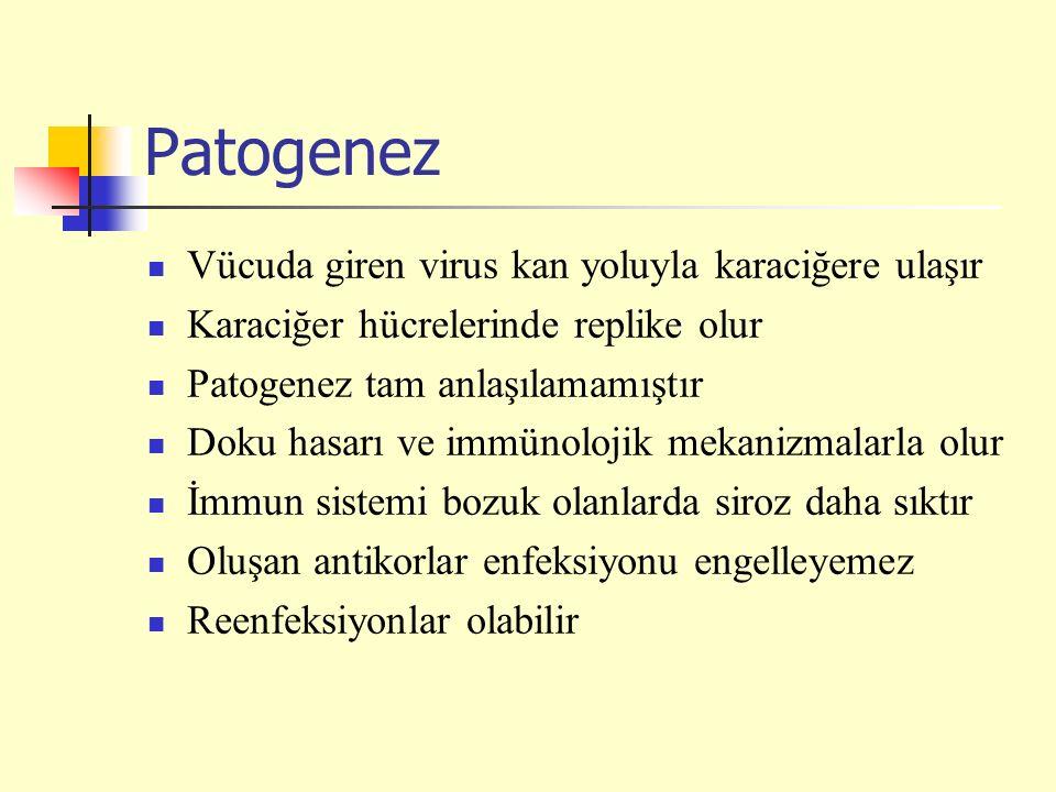 Patogenez Vücuda giren virus kan yoluyla karaciğere ulaşır Karaciğer hücrelerinde replike olur Patogenez tam anlaşılamamıştır Doku hasarı ve immünoloj