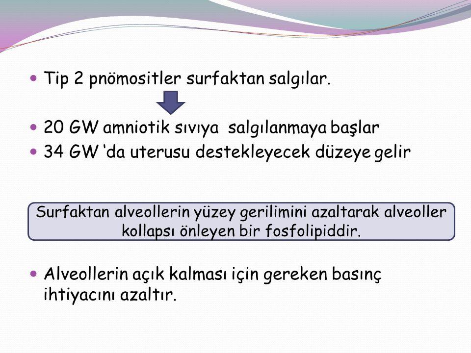 Tip 2 pnömositler surfaktan salgılar. 20 GW amniotik sıvıya salgılanmaya başlar 34 GW 'da uterusu destekleyecek düzeye gelir Alveollerin açık kalması